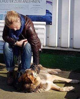 Hundetraining Hamburg mobil Fiffi-Fit